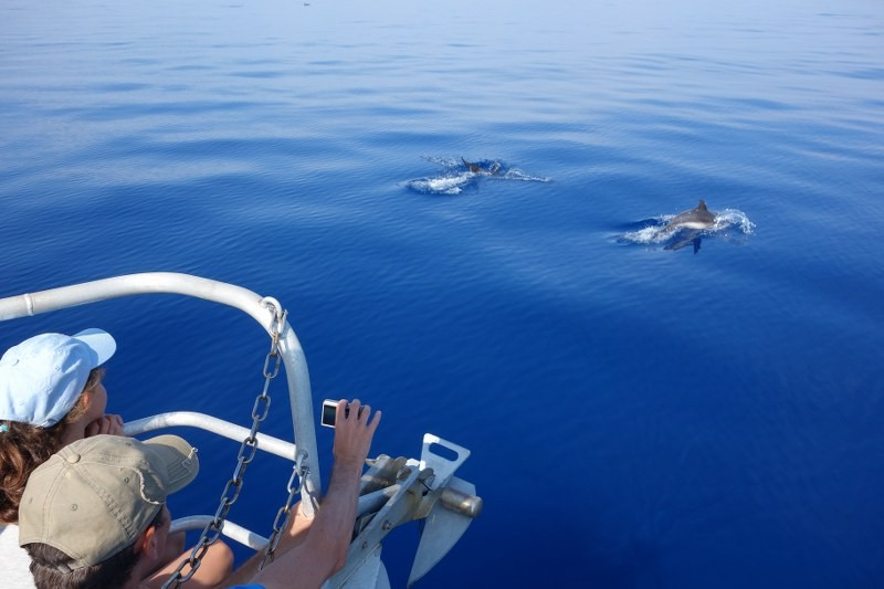 The Pelagos Sanctuary