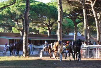 Horse race in hyeres