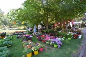 Hyères Gardens