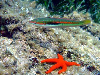 Espace Mer Diving