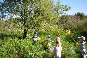 The short course in the bush (special children's guided tour)